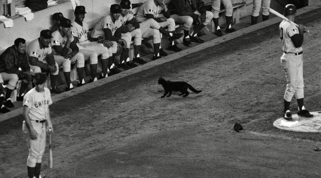 These Are The Animals That Changed The Face Of Baseball Forever